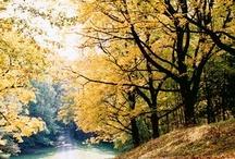 The beauty of fall / by Emily McIndoe