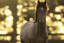 My LOVE for Horses / by Emily McIndoe