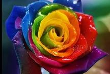 rainbows! / by Emily McIndoe