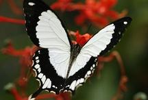 Butterfly's !!!! / by Emily McIndoe