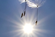 The beautiful sun! / by Emily McIndoe