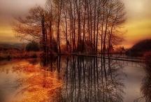 Trees / by Emily McIndoe