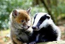 Animals: Odd couples