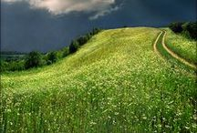 ✿ Meadow, Field, Valley, Grass... ✿