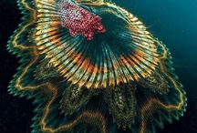 Under the Sea. (Saltwater) / by Sharon Schulz O'Neill