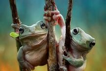 Animals: Snakes, frogs and lizards