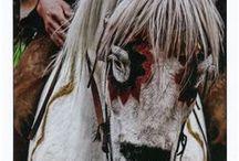 Caballos_horses_Pferde / Doma, raid, western, salto, cuidados y consejos
