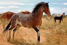 ✿ horses ✿