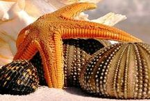 ✿ Seashells & Starfish & other Sea Gems ✿