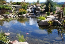 Ponds & Waterfalls / Whether your property has a waterwall, waterfall or a pond that includes fish and or a watergarden, ECOsmarter's natural oxygen system will keep your water features free of algae (including string algae), all while eliminating scale on the natural rock, or murkey water.  / by ECOsmarte