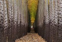 Tree way - Pathway & Tree Tunnel / A tree tunnel is a road, lane or track where the trees on each side form a more or less continuous canopy overhead, giving the effect of a tunnel.  The effect may be achieved in a formal avenue lined with trees or in a more rural setting with randomly placed trees on each side of the route. It can create a beautiful setting