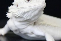 Albino Album
