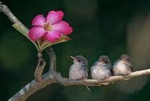 Birds  & Butterflies / by irma