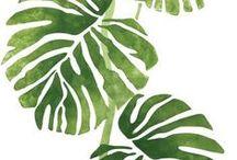 Green&white / I colori di Magazzino