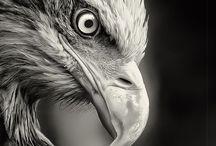 Birds, ptáci