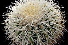 Cactus, suculents
