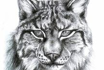 Lynx siluets, graphic, tatoo ...