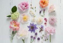 Pflanzenideen für Garten