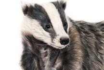 Badger siluets, graphic