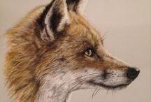 Fox drawing, painting