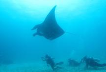 Raja Ampat, Papua's underwater paradise / by The Jakarta Post Travel