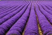 Health - Lavender & OtherHerbs