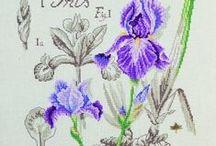 CrossStitch Iris