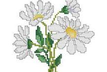 CrossStitch Daisy, Chrysantemum