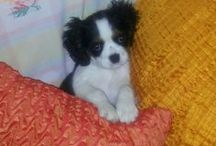Lilly, my Best Friend!!! I LOVE YOU...