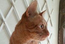 Pumba / My cat