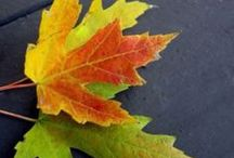 Blazing Fall Colors / Inspirational for painting beautiful canvases or perking up your wardrobe.
