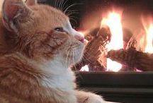 Cozy & warm