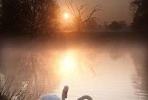 Lintujen maailma / Lintuja ja luontoa