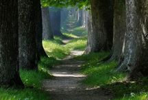 Forest and paths