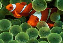Salt water fish & the beautiful world underwater