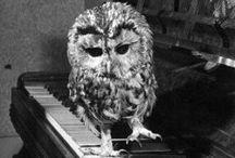 Owls / I <3 owls