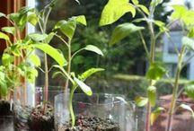 Plantes et plantations