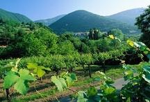 Franciacorta & Co / Pare che le origini di questo piatto siano a Rovato, in Franciacorta, e risalgano al Cinquecento.