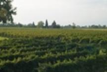 Veneto: Pramaggiore
