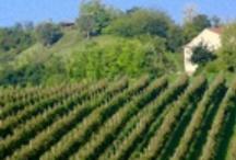 Veneto: la strada del Prosecco