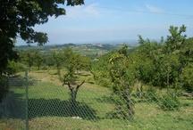 Oltrepo Pavese: Rivanazzano Terme