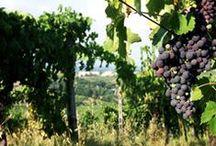 Toscana e le Terre del Chianti