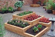 Growing plants, food / Garden ideas / by Carol