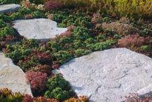 zelená střechy | green roof