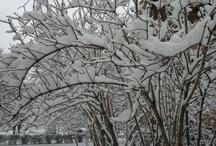 the seasons of the year - pory roku