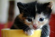 All things feline...