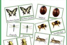 Montessori / Montessori and Montessori-inspired activities