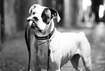 Dogs Portrait Black & White