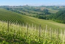 Langhe - Piemonte, Italy / Travels, hotspots & lifestyle
