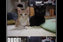 Funny Funny Cats / The funny side of cats and what they are thinking! / by Tuxi Stringer